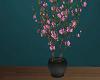 [SM] Sakura Plant