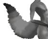 Grey fox tail (IH)