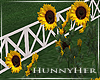 H. Sunflowers