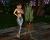 Summer Aloe Plant