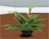 Amarok Art Gallery Plant