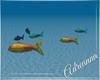 ADR# Underwater Fishes