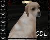!C* M Puppy Dog