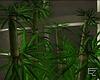 ϟ  Asian Bamboo v.2