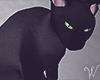 B&W Black Cat
