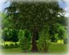 [Luv] Park - Tree 1