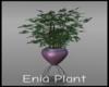 -IC- Enia Plant