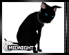 !M! The Coven Cat