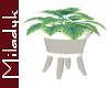 MLK White Plant