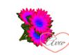Bouquet Daisy Neon P/Blu