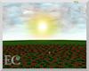 EC| Vamp Rose Field