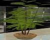 PALM TREE IN WICKER POT
