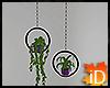 iD: DMac Hanging Plant