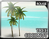 |2' Coconut tree II