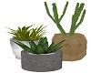 Trio Succulents Plants
