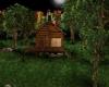 My Hidden Forest