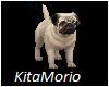 PUG  -  My  Puppy