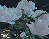 Dantes Rose Vine
