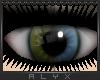 Olive|Sky 2Tone Eyes [F]