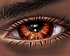 B! Oak Eyes x