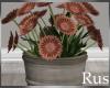 Rus Burke Flowers