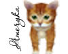 -A- Creamsicle Kitten