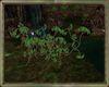 Green Leaf Ivy