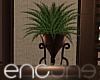 !E! PALMS PLANT