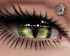 Feline Ivy Eyes F