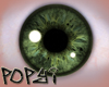 Male Green Eye's