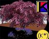 (K*) Magnolia Tree