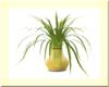 Plant In Yellow Vase