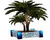 Aqua Blues Potted Plant