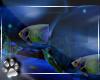 Aquatic -Fish Bubbles