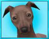 Grey Hound Dog Decor