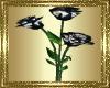 LD~Black Rose Animated