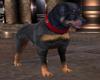 ~PS~ Palace Guard Dog