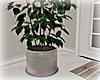 [Luv] Plant 6