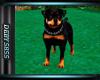 DY* Rottweiler w/trigger