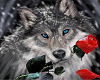 wolf rose radio 1