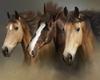 Framed Three horses Pic