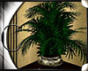 .:C:. Hacienda plant2