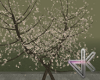 *DK Street Tree Romanc