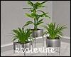 [kk] Modern Plant 2