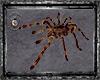 Spider Tarentule
