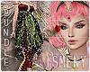 [Is] Fairy Luxury Bundle