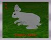 lapin blanc white rabit