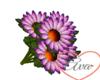 Bouquet Daisy Purple