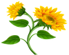Sun Flower - 1