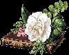 sticker livre et fleurs